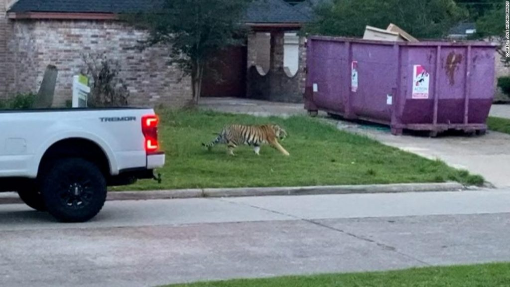 Opinion: The scary problem of the Houston tiger