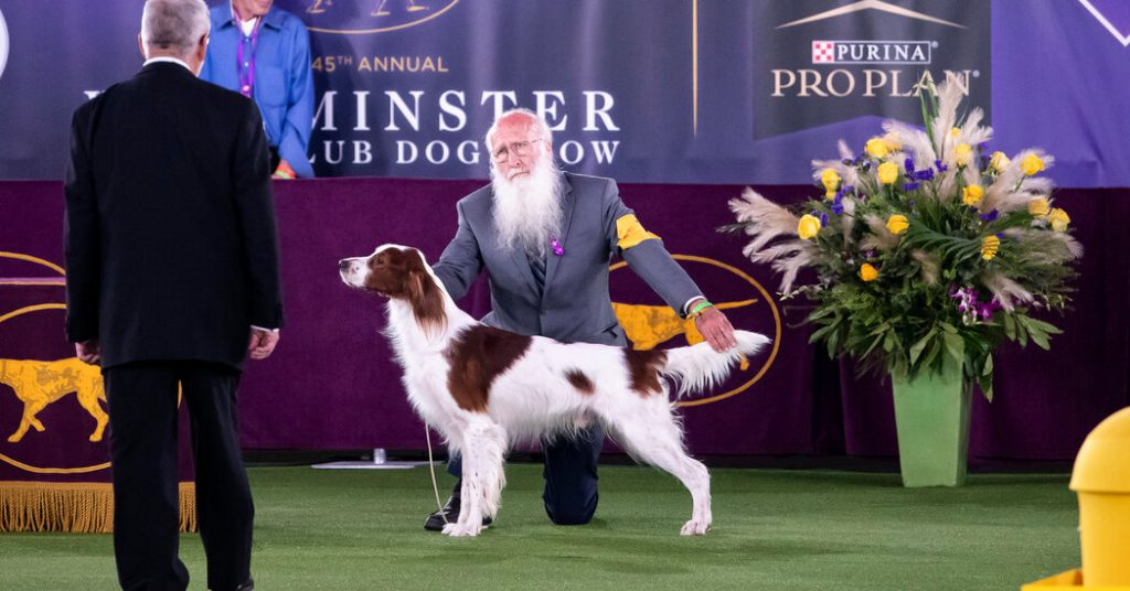 Westminster Dog Show 2021 Live Updates: Westie Wins the Terrier Group With Best in Show Next