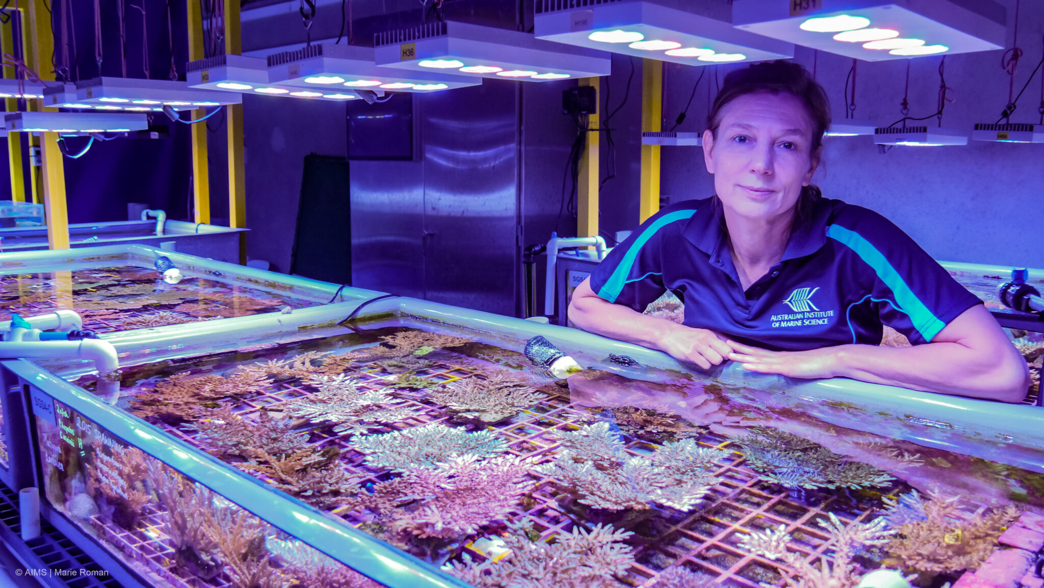 Paul G. Allen Family Foundation funds $7.2M in grants to shield coral reefs from decline