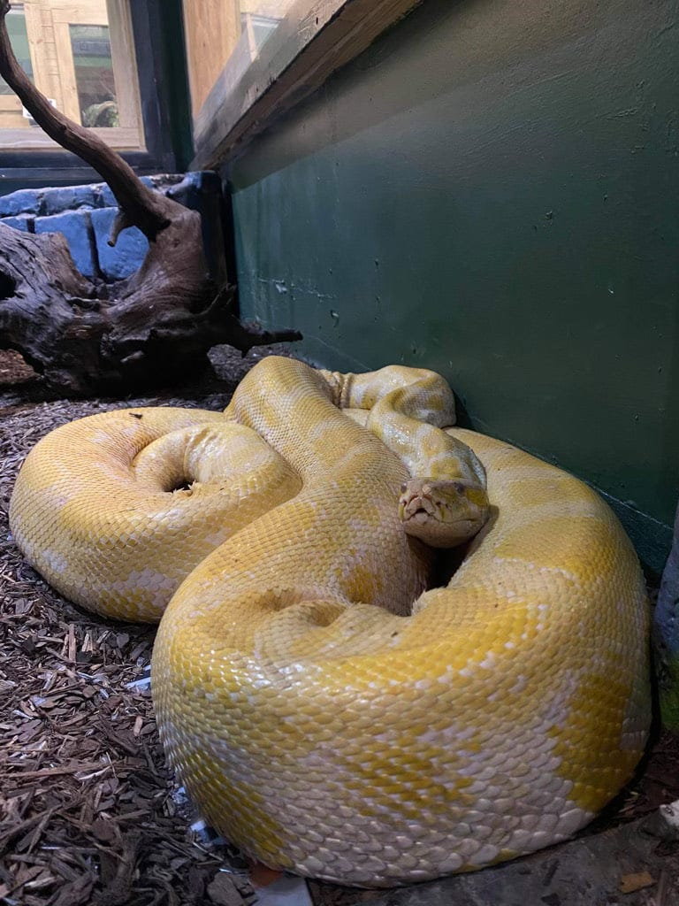 12-foot python on the loose after escape at Louisiana mall