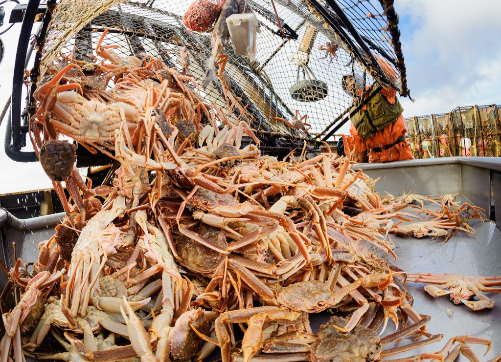 How an Alaskan fisherman saw potential for a sustainability startup in a mountain of crab shells